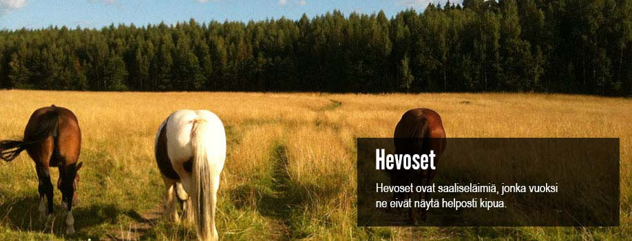 elainfysioterapiaa-hevosille
