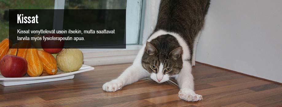 elainfysioterapiaa-kissoille