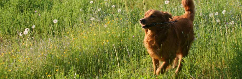 elainfysioterapiaa-koirille